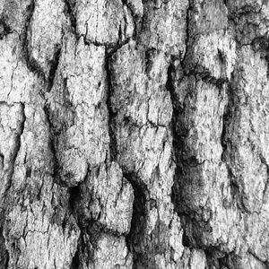 Abstract Black & White Photo Wall Art Tree Bark 5